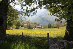 Decontra in the Distance Across A Yellow Field